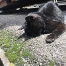 黒猫  メス   老猫