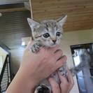 後ろ脚の指が1本無い 子猫ちゃんを貰ってください♫