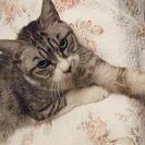 😹★里山DE猫好き&動物好き&DIY好きメンバーetcでBBQパー...