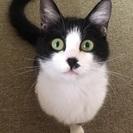 右手不自由◆里親募集【子猫の家族になってください】
