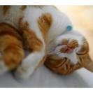 たっぷり ほっこり ねこやすみ。猫...