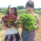 野菜の収穫体験しませんか? - 地域/お祭り