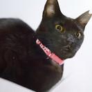 とても甘えたで可愛いスリムな黒猫!