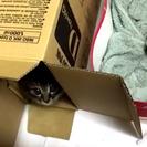 【捨て野良子猫】宇都宮~日光周辺にお住まいの方へ:里親募集中