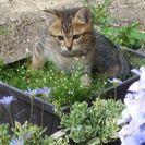 とても可愛い仔猫がいます。