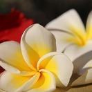 8/27【新大阪】「ハワイの香り」世界にひとつだけ、なりたい自分を...