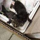 子猫2匹の里親募集します!