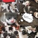 保護した猫がママでした。至急!どなたか助けてください!