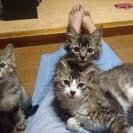3匹の子猫の里親募集