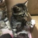 お願いします!!!子猫及び猫の里親募集致します。