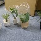 引取り限定大特価。観賞用植物 7個セット