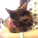 7月2日(日) 猫の譲渡会 名古屋市港区 社会福祉法人 中部盲導犬...
