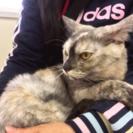 7月16日(日) 猫の譲渡会 名古屋市西区 ふれあい館 主催:みな...