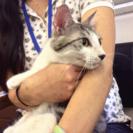 7月23日(日) 猫の譲渡会 名古屋市西区 ふれあい館 主催:みな...