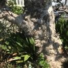 この木なんの木ですか?