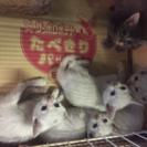 5匹の仔猫里親さん探しています。