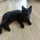 4か月位の黒猫ちゃん♀里親募集