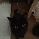 黒猫を引き取ってください!!