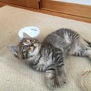 6月22日に猫の譲渡会開催(=^^=)