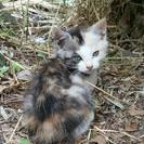 2ヵ月くらいの元気な子猫の里親さん募集です☺