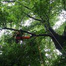 急募。アーボリスト、特殊伐採、庭園管理の求人