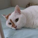 愛らしい大人の夫婦猫さんのお家を探しています