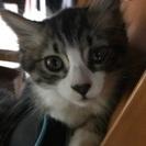 生後3ヶ月位の仔猫の里親探しています。