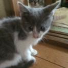 4月16日に生まれた仔猫です。