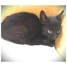 黒猫の子猫ちゃんです