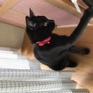 人が大好き黒猫ノアちゃん