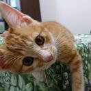 2ヶ月茶白のかわいいお姫ニャン♡