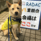 6月25日(日)犬猫譲渡会  in川崎