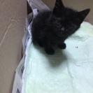 生後2~3週 黒猫 男の子