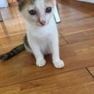 里親募集☆メス☆子猫☆約2ヶ月