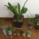 観葉植物 4個セット