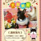 犬服教室🐾Chako's Factory🍒駒川文化センター教室