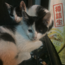 子猫を可愛がってくれる人いませんか?