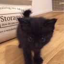 かわいい黒猫ちゃんです。