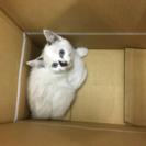 【写真追加しました】子猫 白猫 青い眼