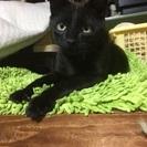 黒猫の男の子です