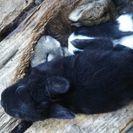 ウサギの赤ちゃんです。