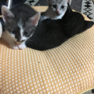 生後1ヶ月ちょっとの子猫