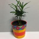 ラカンマキ、ミニ観葉植物、手描きの鉢付き