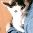 白と黒模様の子猫ちゃんです