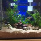 熱帯魚とセット一式