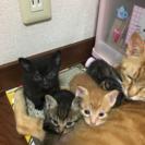 5月27日生まれの猫ちゃん里親募集