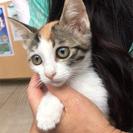 7月30日(日) 猫の譲渡会 名古屋市守山区 もりやま犬と猫の病院...