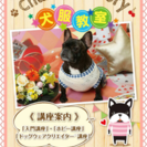 犬服教室🐾Chako's Factory🍒 駒川文化センター教室のご案内