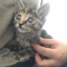 生後1ヶ月以内の猫ちゃん💓
