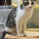 3ヶ月くらいの雄猫